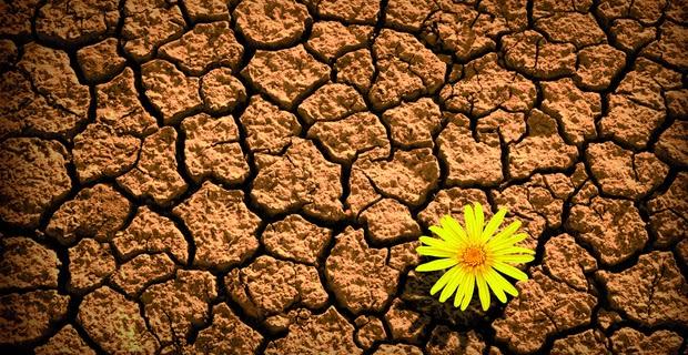 Cómo fomentar la resiliencia