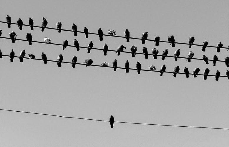 pájaro aislado