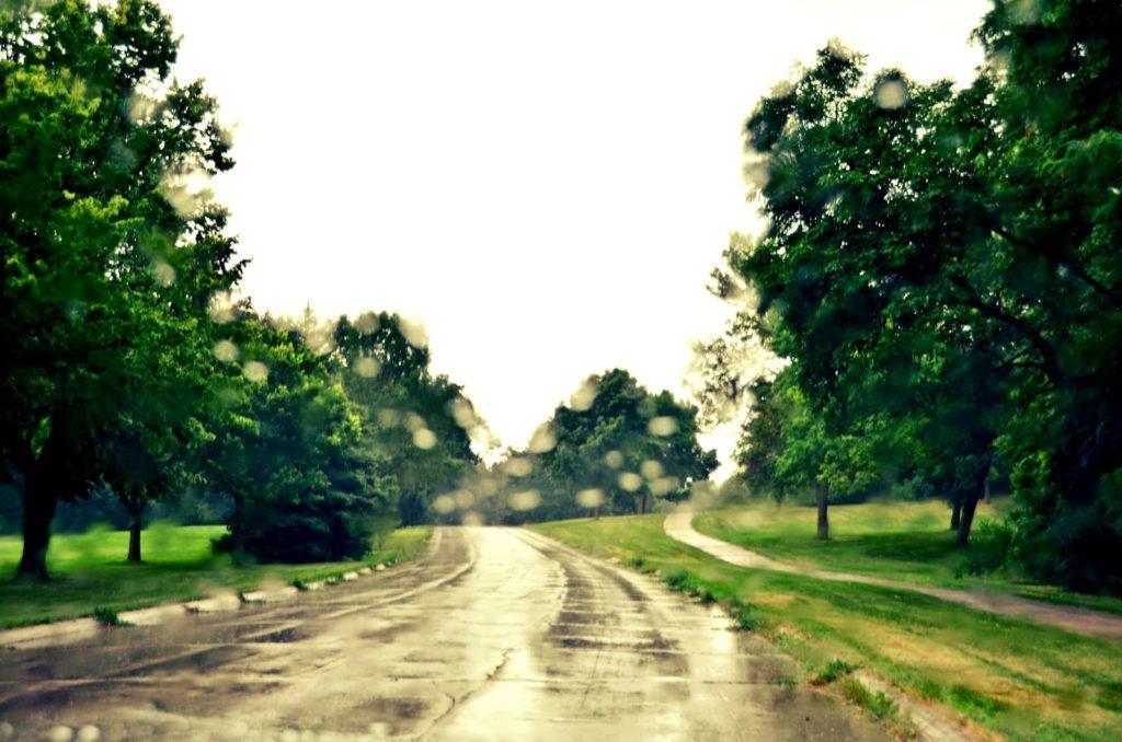 carretera con árboles