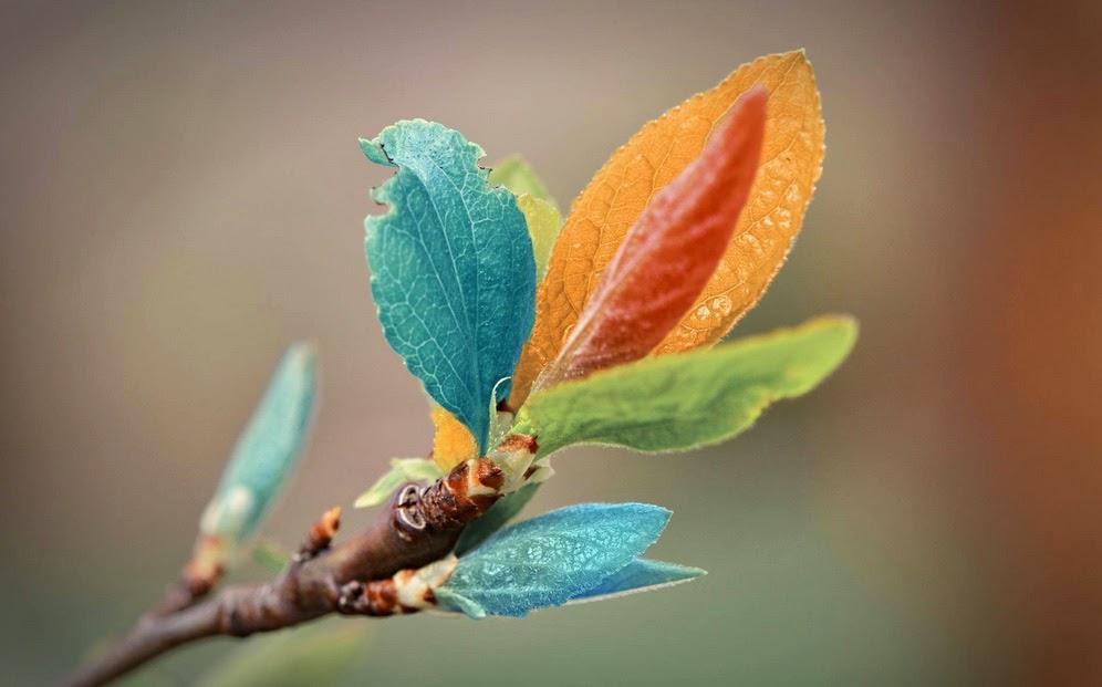 Rama con hojas de colores