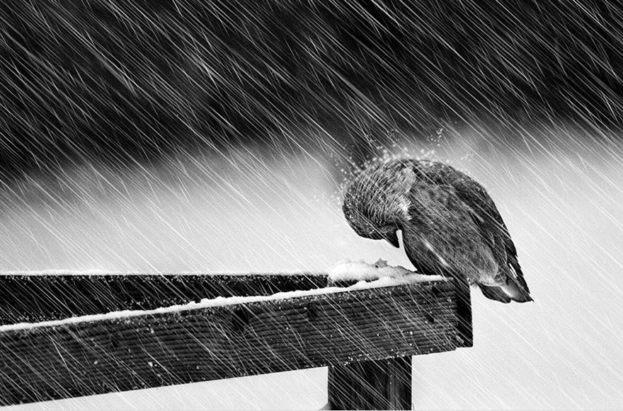 Pájaro en la lluvia