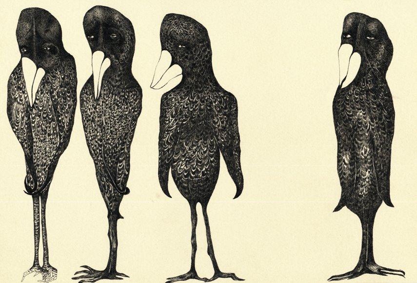 Dibujo de aves negras