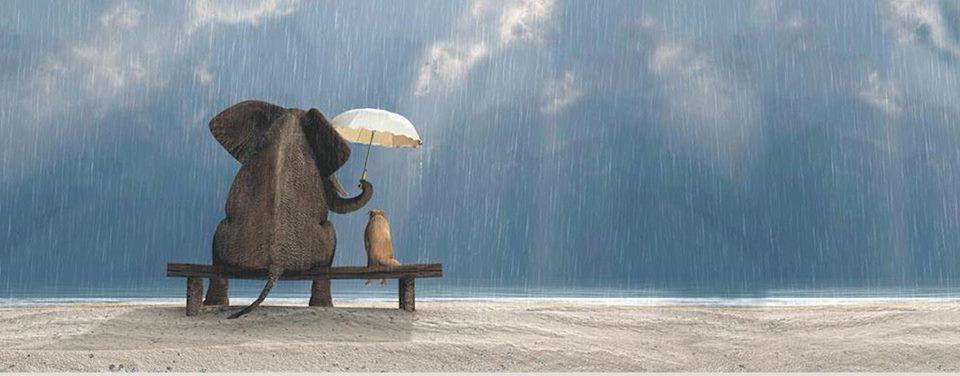 Compasión: Lo mejor que puedes hacer por ti es ayudar a los demás a levantarse ⋆ Rincón de la Psicología