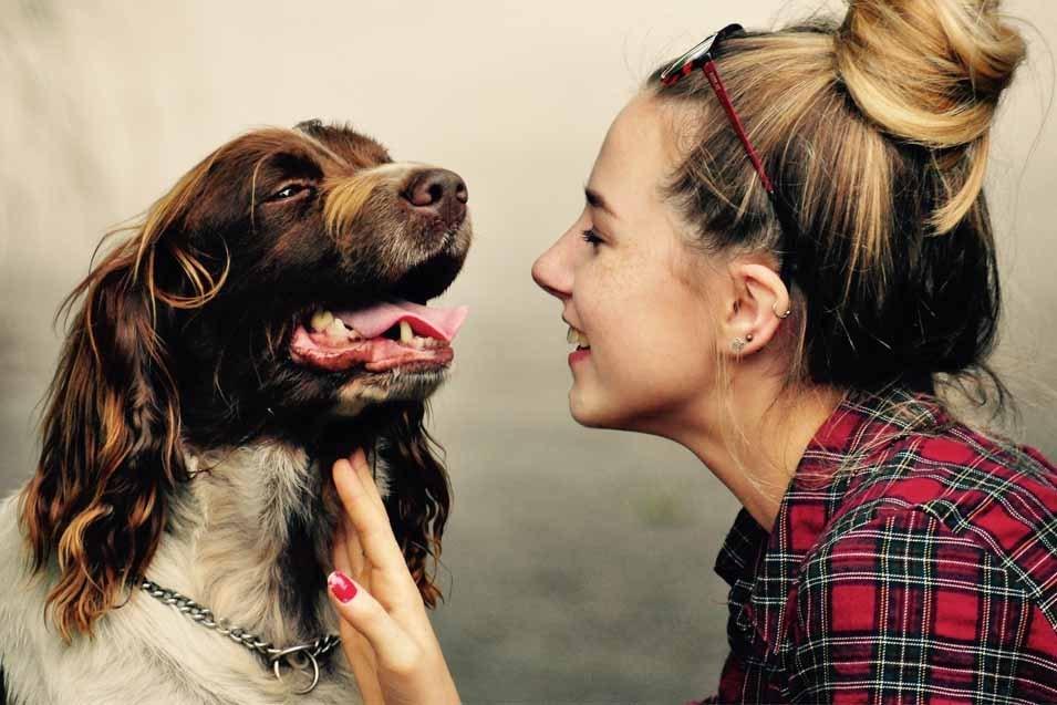 dueños y perros estresados